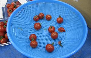 tomato-check2